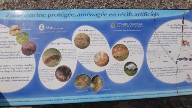 informationstavlan om det marina livet i Medelhavet.