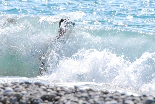 Vågor med starka underströmmar.